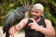 palm cockatoos