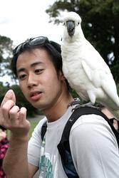 Umbrella cockatoos